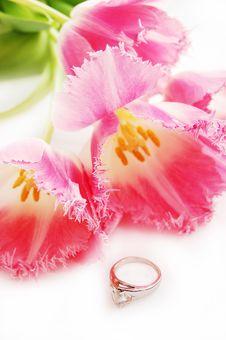 Free Tulips Stock Photography - 6018722