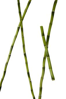 Free Plant Stems Royalty Free Stock Photography - 6019327