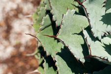 Free Cactus Macro Stock Photography - 6019492