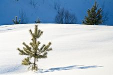 Free Winter Day Stock Images - 6019734