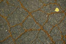 Free Asphalt S Pattern. Stock Photography - 6019842