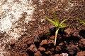 Free Aloe Ferox Stock Image - 6024051