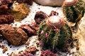 Free Barrel Cactus Stock Images - 6024054