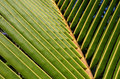 Free Closeup Of A Palm Frond Stock Photography - 6024522