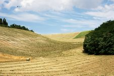 Free Hay And Straw In Lines Stock Photos - 6020213