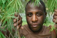 Man Among Tree Branches Stock Image