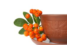 Free Ceramic Cup And Mountain Ash Stock Photography - 6021922