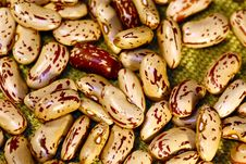 Pinto Beans Royalty Free Stock Image