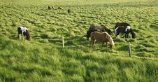 Free Horses In The Countryside Stock Images - 6022874