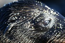 Free Sea Lions Head Macro Stock Photo - 6023060