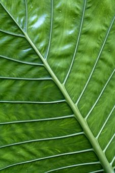 Free Green Leaf Stock Images - 6023334