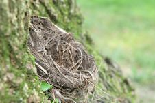 Free Empty Nest Stock Photography - 6023662
