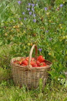 The Strawberries In The Basket Stock Photo