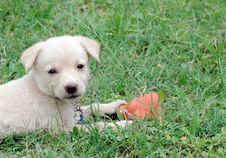 Free Puppy Stock Image - 6024351