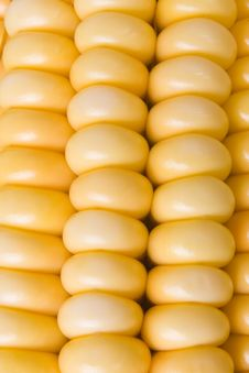 Fresh Sweetcorn Stock Images