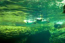 Free Swimming Penguins Stock Image - 6024441