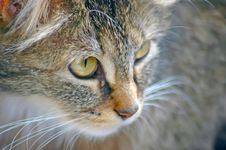 Free Wood Cat Royalty Free Stock Image - 6024586