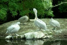 Free Pelicans Stock Images - 6024634