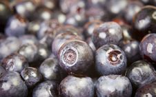 Free Blueberry Stock Photography - 6024692