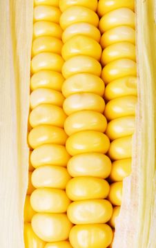 Crunchy Fresh Sweetcorn Royalty Free Stock Images