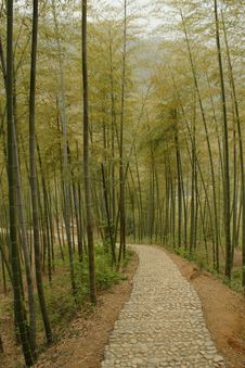 Free Bamboo Forest Royalty Free Stock Photography - 6025217
