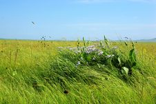 Free Nailin Gol Grassland Royalty Free Stock Photos - 6026008