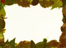 Free Frame Of Leaves. Royalty Free Stock Photo - 6026045
