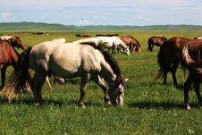 Free Horses On The Nailin Gol Grassland Stock Image - 6026121