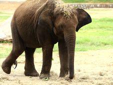 Free Elephant Stock Photos - 6026263