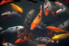 Free Fish Royalty Free Stock Images - 6027789