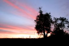 Free Bush On The Sunset Royalty Free Stock Images - 6027809