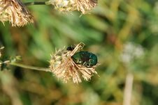 Free Bug Royalty Free Stock Image - 6028716