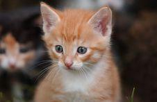 Free Kitty Stock Photos - 6029493