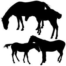 Free Horses Silhouettes Stock Photos - 6029573