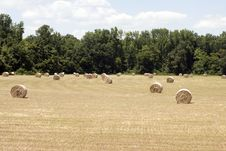 Free Hay Field Stock Photography - 6029862