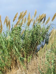 Free Beach Grasses, Israel Stock Image - 60254171