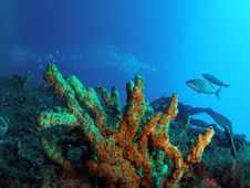 Coral Reef And Scuba Diver Royalty Free Stock Photos