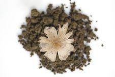 Free Seedling Stock Image - 6033271
