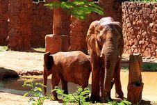 Free ELEPHANT Royalty Free Stock Image - 6033396