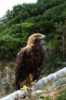 Free Eagle Stock Photos - 6033773