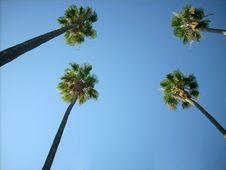 Free Palms Square Stock Photos - 6034623