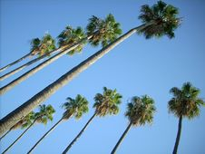 Free Palms Parallelism Stock Photography - 6034642