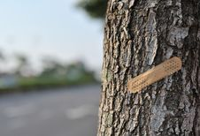 Free Save Trees Series 5 Stock Images - 6035744