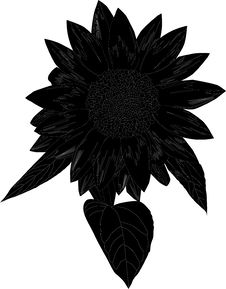 Free Sunflower Silhouette Stock Photography - 6036092
