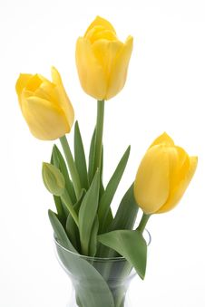 Free Beautiful  Yellow Tulips In A Vase Stock Photography - 6036552