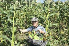 Free Farmer Royalty Free Stock Photo - 6037495
