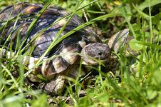Free Little Tortoise Stock Photos - 6037523
