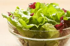 Free Salad Stock Photos - 6038093