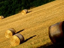 Free Hay S Rolls Royalty Free Stock Photography - 6039117