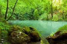 Forest River Source Scene Stock Images